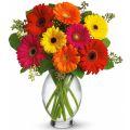 send gerbera flower to manila philippines