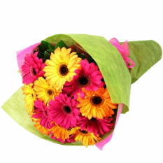 send 12 pcs. mixed color gerberas in bouquet to manila