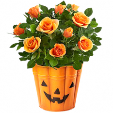 send bewitching beauty halloween mini rose to philippines