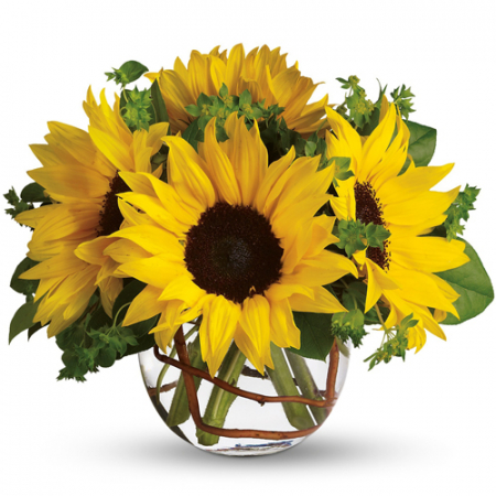 send 5 pcs sunflower In vase to manila